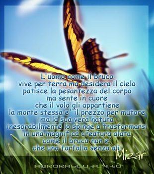 Farfalla_messaggio_4